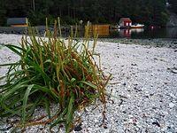 Oaza zieleni na piasku