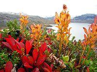 jesień w górach Norwegii