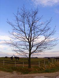Drzewko i koniki:)