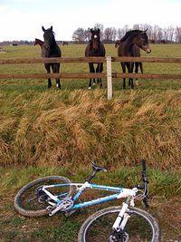 Po chwili naszej obecności zaczęły się schodzi konie z całego pastwiska:P