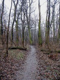 Morysin - droga prowadząca do ruin pałacyku
