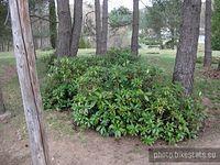 Śródziemnomorska roślinność w Arboretum Leśnym w Zielonce.