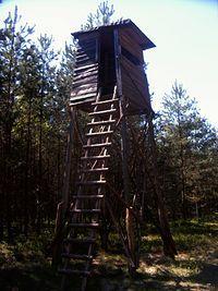 ambona gdzieś w lesie