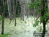 Park Krajobrazowy Promno - niezłe bagno :-)