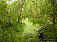 Chojnowski Park Krajobrazowy - żółty szlak rowerowy