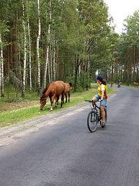 prawie dzikie konie i Asia ...