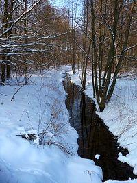 Strumyk w lesie (tak naprawdę to kanał melioracyjny, ale strumyk brzmi o wiele lepiej ;))