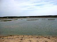 jeziorko po żwirowni koło Gołunia