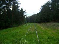 Linia kolejowa 53 do Spały znowu zarosła