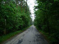 Leśny odcinek drogi na Glinnik