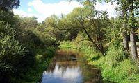 rzeka Kocinka