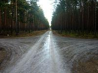 Miejscami ścieżki leśne były solidnie oblodzone