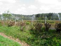 Szkółka leśna przy drodze do Dobieszczyna