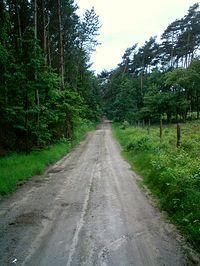 Jazda leśną drogą przez Uroczysko Maruszka w Pyszczy Zielonka