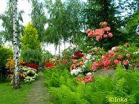 Bujaków, ogród przy kościelny