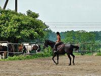 Stadnina koni w Węgrach. Nauka jazdy. Piękny widok:))