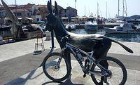 Jeden z symboli Dalmacji - osioł