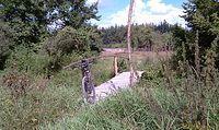 Urokliwy mostek na Kocince, Trzebca