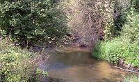Kocinka we wsi Trzebca, ryba chodzi