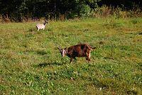 I tu kozy