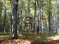 Ambona w lesie