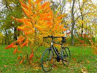 Speeder w jesiennych barwach