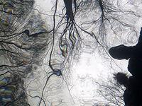 My spod wody pod Barnimiem - 53.151908,15.817113