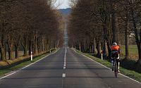 Plecy na zjeździe do Gładyszowa