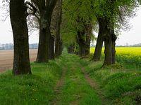 Polna Droga z Kicina do Wierzonki