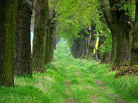 Piękny, zielony korytarz