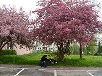 Dwie kruche istotki kryją się pod koronami drzew nie wiedząc że podczas burzy tam najbardziej będzie bolało ;)))