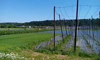 Podmoikłe pola w Parchatce