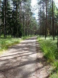 Piękna leśna ściezka