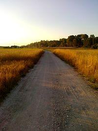 Droga wśród zbóż