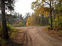 Leśna droga w lasach zbierskich