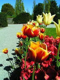 Cmentarne kwiaty...