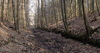 Leśny kanał bez wody