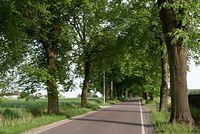 Aleją drzew w pobliżu lotniska wojskowego na Glinniku