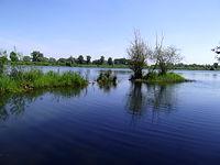 Polder Buków w okolicy Roszkowa