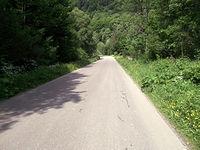 Tonąca w zieleni droga przez Buk, Bukowiec