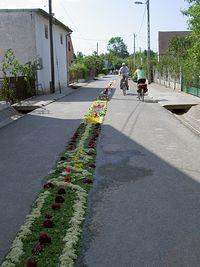 Dywan z kwiatów wzdłuż drogi Bożego Ciała