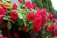 Kwiaty ogrodowe ;)