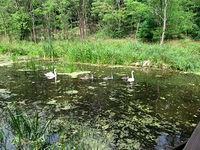 Rodzinka na kanale Łasica - żółty czyli Kacapska Droga
