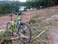 Karczowanie lasu przy jeziorze Cichym