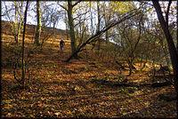 Zjazd w lesie po liściach