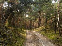Przełęcz w Helenowskich Górach. Kampinoski PN