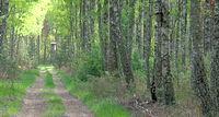 Ambona myśliwska w lesie w okolicy Hołodnicy