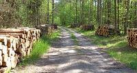 Przez las z Jaźwin do Białej Podlaskiej