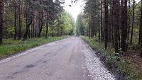 Droga przez puszczę