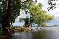 Jezioro Miedwie w Morzyczynie